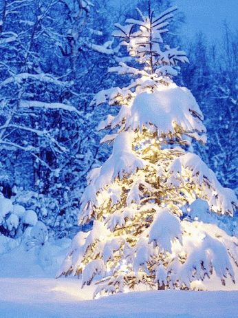 Larry Williams photography  /  Fuse   | Illuminated Christmas Tree Under Snow   | GIF