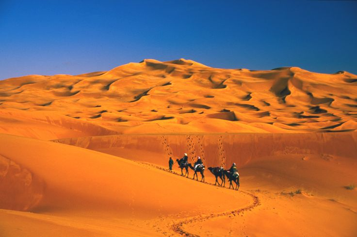 We treasure our camels and sand dune in the Sahara desert.