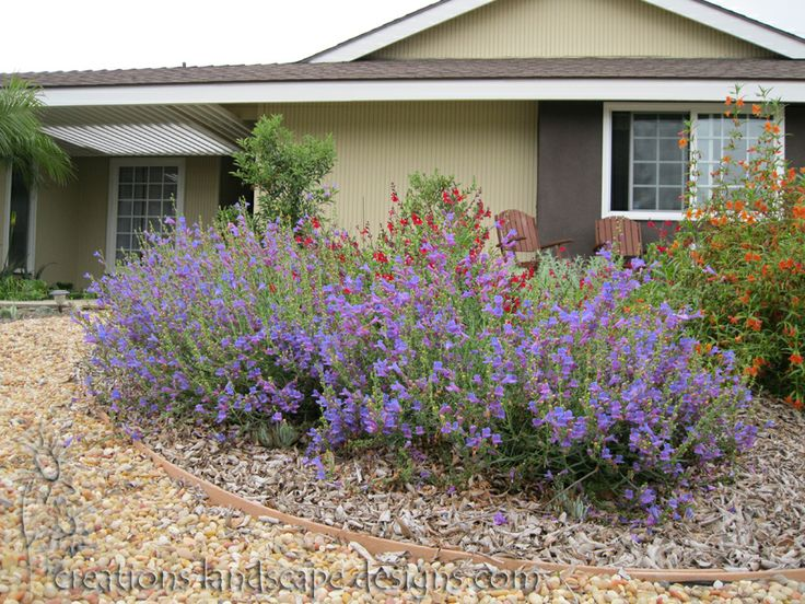 17 Best images about California Native Gardens on Pinterest