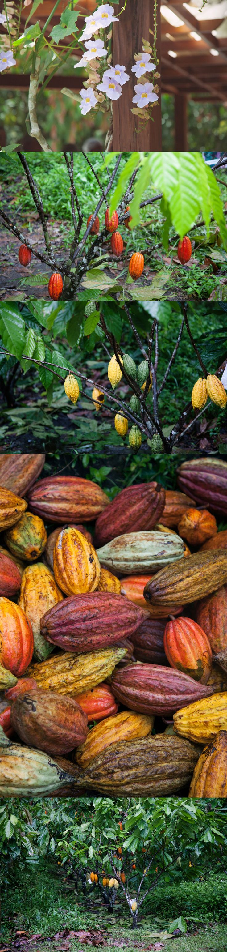 République Dominicaine the best cacao. Brought home 3 pounds! Summer 2013