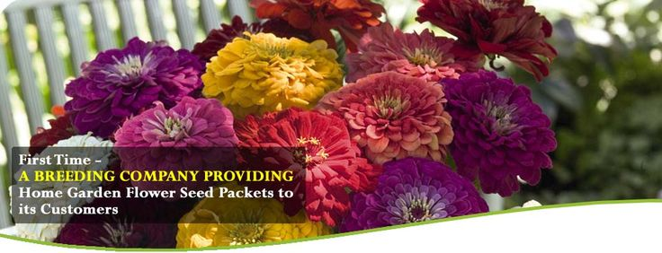 Flower Seeds Online – Benary Smile Benary Smile is an initiative by Kraft seeds to provide Benary Flower Seeds in pictorial packets. Now one can enjoy affordable BENARY SEEDS of Germany in Benary Smile Packing provided by Kraft seeds India. It is indeed for the first time in the history of Flower Seeds, that a Breeding Company has its range of seeds in Pictorial packets. http://www.benarysmile.com