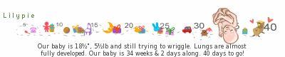27 semaine