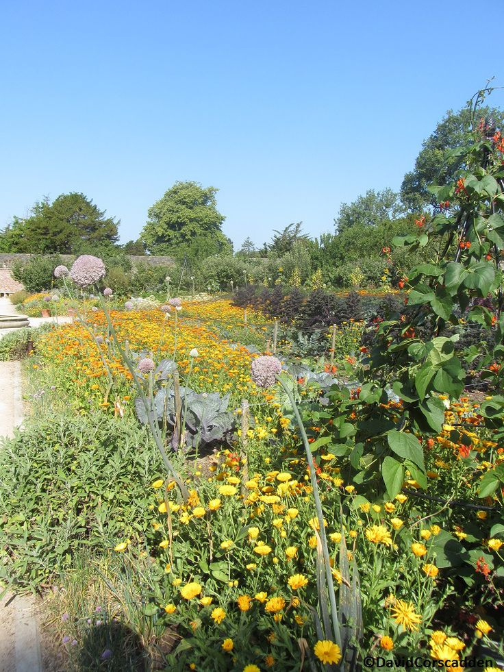 Trip to the Vegetable garden at the botanic gardens