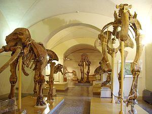 Museo di Storia Naturale di Firenze