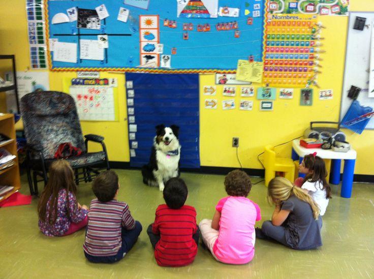 Les animaux ont beaucoup à nous apprendre.   Voici Lili, une berger australien, lors d'un contrat dans une classe de maternelle... ❤  Apprentissages: -amour -douceur -patience -écoute -ouverture d'esprit -confiance en soi -amitié -persévérance -vaincre ses peurs -tour de rôle -sens de l'observation -sécurité -un peu de tout sur le chien -...