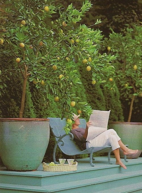 Lemon trees - sigh. I love everything about this picture. If it was me though, I'd be reading a book and not the paper. :-)