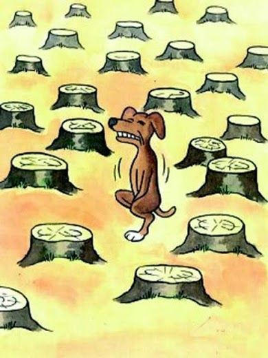 La déforestation...