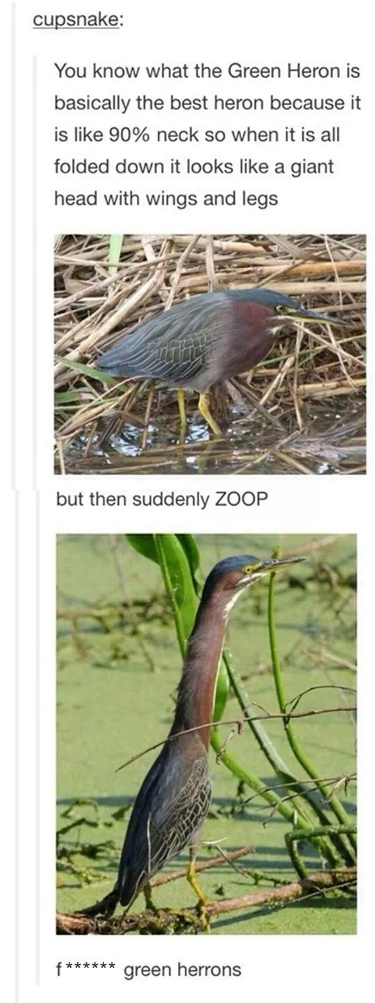 This Bird Is Not Like Other Birds