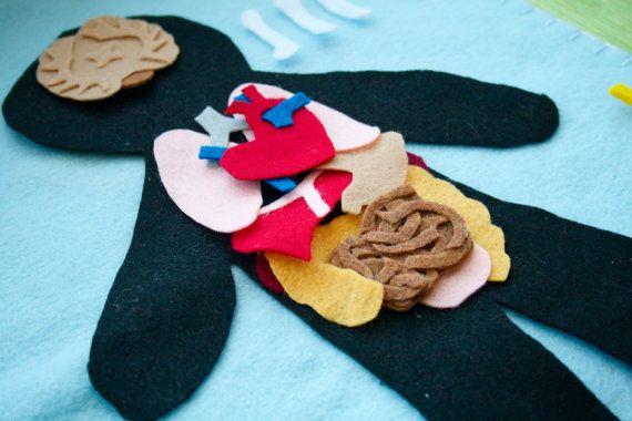 Anatomia Umana Felt Set - Scienza Toy - Educational Felt Story - flanella Board - Vita Child - STEM