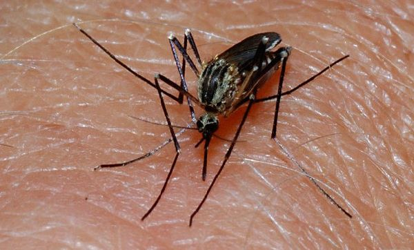 7 Natural Mosquito Repellents To Stay Safe And Happy