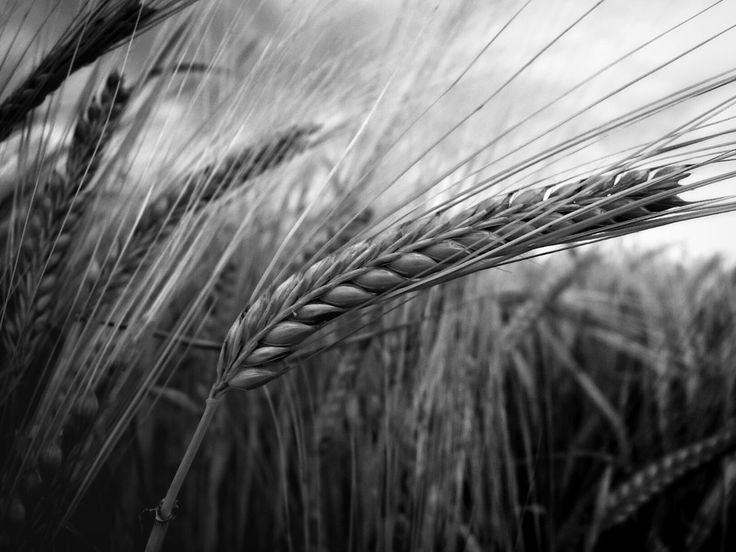From the fields by Milan Cernak on 500px