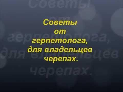 Советы для владельцев животных, птиц и других  Советы от ветврача герпет...