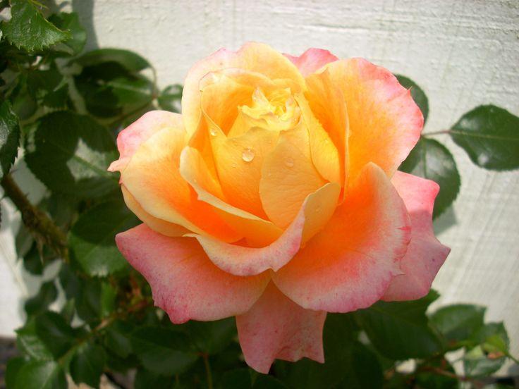 http://0.tqn.com/d/gardening/1/0/U/2/1/DigAHole1-Post1-X.JPG
