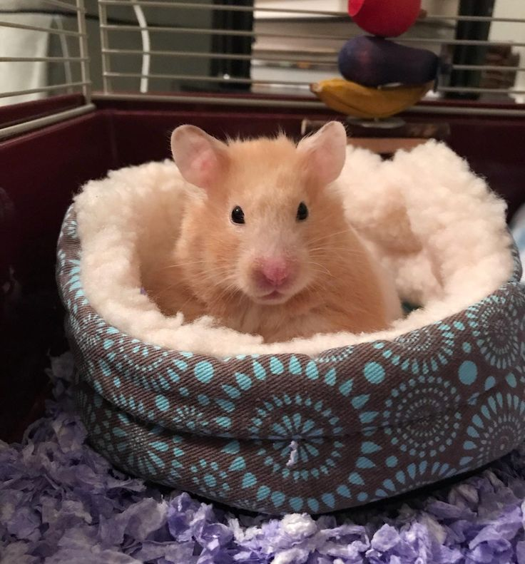 Caught my lil girl giving her best modeling face (and actually sitting in her bed!!)http://ift.tt/2sQ2iJQ
