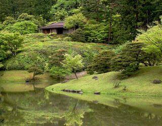 Сибирский кедр: сочетание посадок с другими деревьями и растениями- клен, береза, осина, лиственница