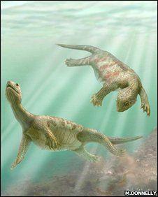 The now extinct odontochelys semitestacea, meaning half-shelled turtle with teet… – Jack Streeton