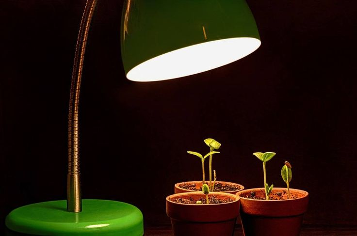 LED Grow Lights VS. HPS: Which One Do You Need?
