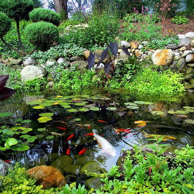 741 best images about koi and ponds on pinterest for Carp pond design
