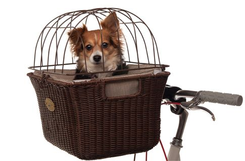 :))Bicycles Baskets, Dogs Bikes, Ingenious Things, Pets, Doggie Baskets, Bikes Baskets, Bikes Riding, Fashion Dogs, Dogs Baskets
