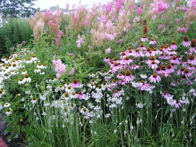 Indiana Native Plant Society: Why Landscape with Native Plants?