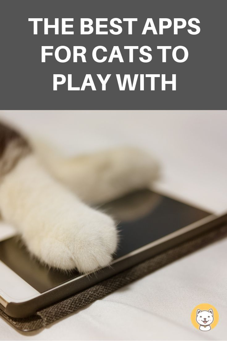 The Best Apps For Cats To Play With Kitty Cats Blog Cat App Kitten Proofing Kitten Care