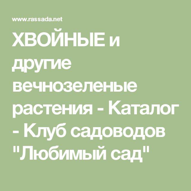 """ХВОЙНЫЕ и другие вечнозеленые растения - Каталог - Клуб садоводов """"Любимый сад"""""""