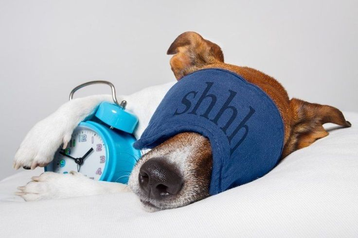 Dogs enjoy all of the benefits of bean bags just like we do, and the best part is that they are good for them and invite deep, restful periods of sleep