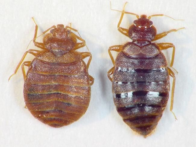 How to avoid bedbugs: Keep your luggage in the hotel bath