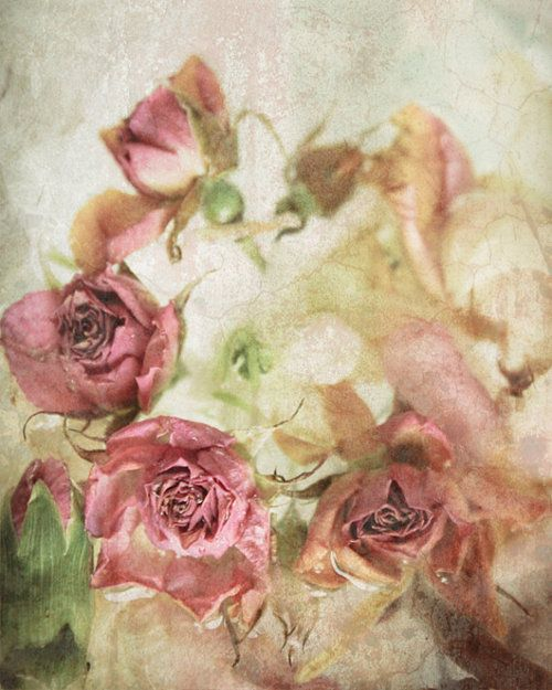 <3<3: Pink Roses, Country Shabby, Shabby Chic, Flower Photo, Flowers, Dusty Rose, Vintage Rose