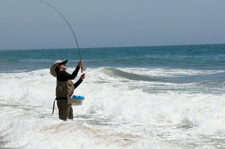 68 best california surf fishing images on pinterest for Shark fishing gear
