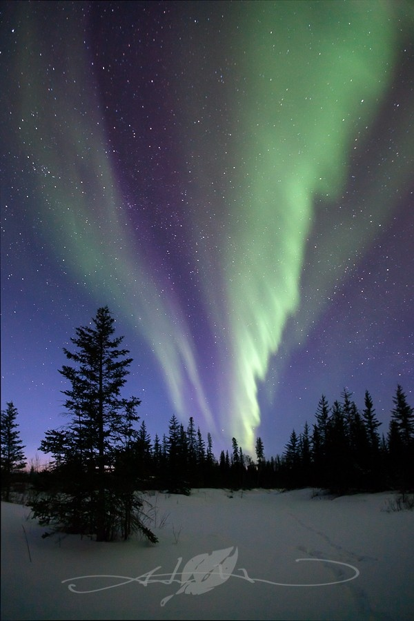 Gorgeous Northern Lights - Hay River NWT. http://www.kaltire.com/