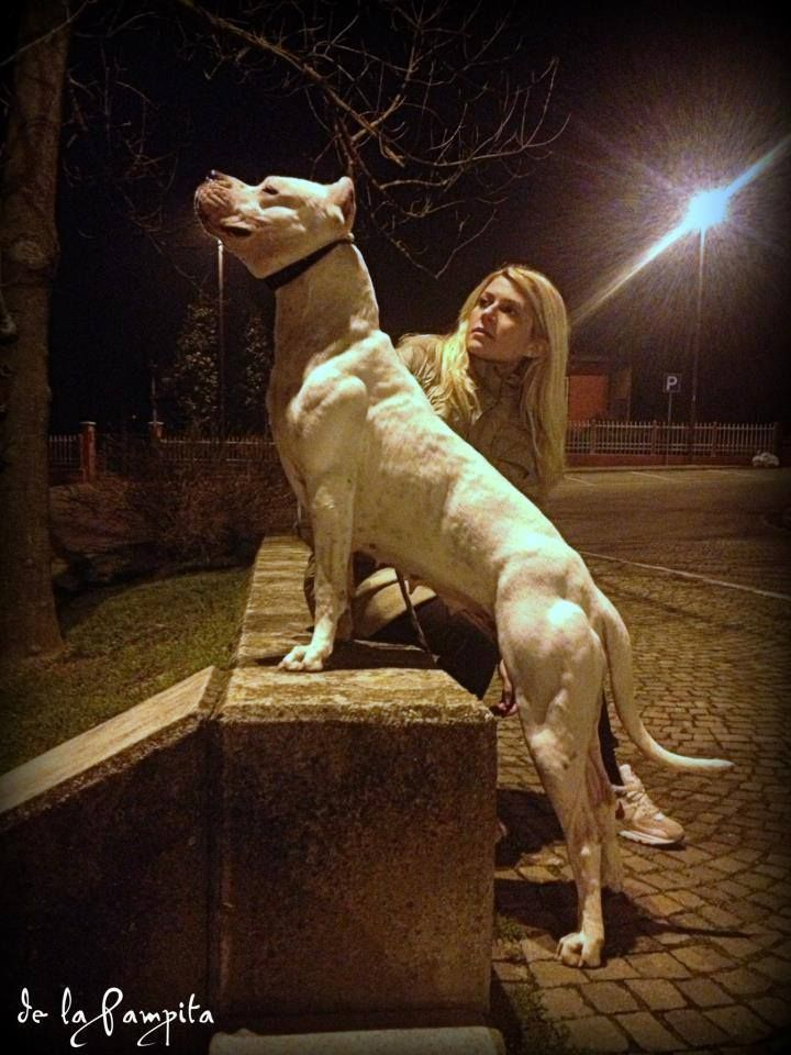 dogo argentino she can sit on any bench in any park in the middle of the night...no problem!!