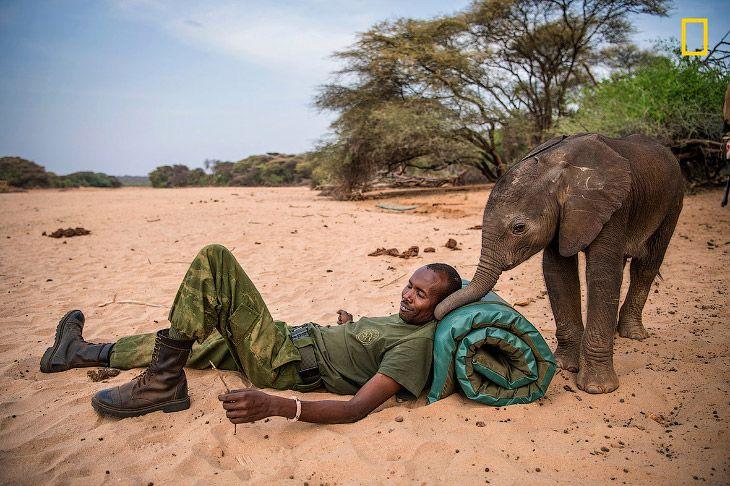 Экосистемные «инженеры»: слоны в Кении http://kleinburd.ru/news/ekosistemnye-inzhenery-slony-v-kenii/
