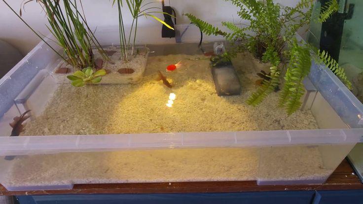 Indoor Goldfish Container Pond Huge Update!!
