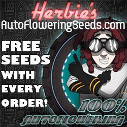 Buy Best Selling Autoflowering Seeds