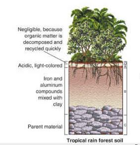 The soil found in the tropical rainforest biome is not for Soil facts ks2