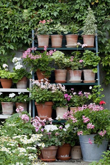 Beautiful way to cover a garden wall with shelves of flowers in terra cotta pots