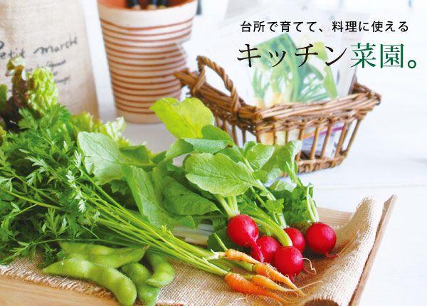 育てるキッチン菜園