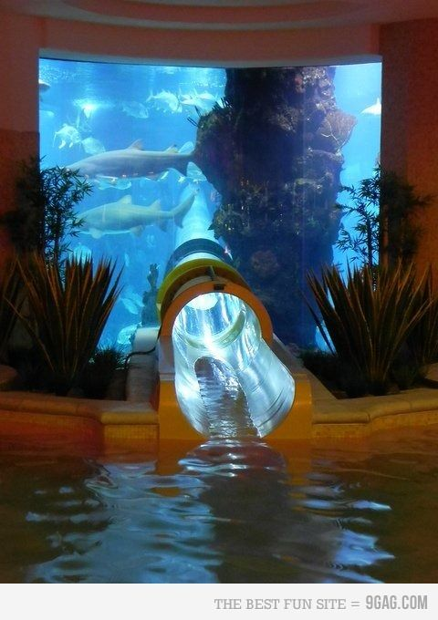 Shark tank water slide at Golden Nugget Hotel, Las Vegas, thats scar and awesome