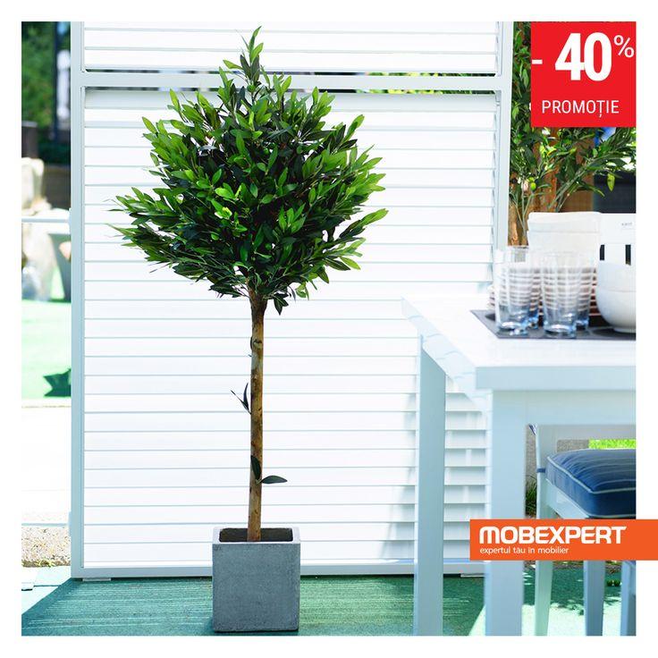 Copacul artificial în ghiveci Maslin este ideal pentru decorarea interioarelor sau spațiilor semi-acoperite, cum ar fi terasa. Realizat din plastic, poliester, cu ghiveci de plastic, acesta are un aspect natural, este flexibil și trainic. Copacul Maslin este tratat cu protecție UV, tocmai de aceea poate fi amplasat și în spații deschise, însă trebuie ferit de vânt puternic și îngheț.