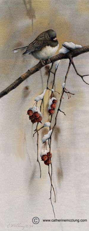 """""""Snowbird"""" aquarelle de Catherine Mc Clung, artiste canadienne qui vit et travaille dans le Michigan."""