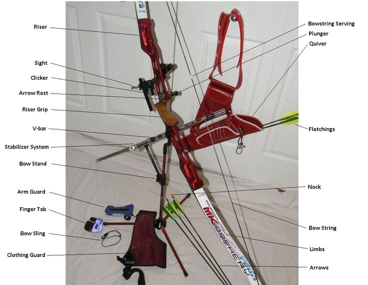 A recurve bow has tips that curve away from the archer when the bow is unstrung. When strung a recurve stores more energy than an equivalent straight limbed bow and therefore offers more thrust to...
