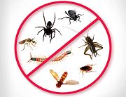 Termite Control in Brisbane can be Effectively Handled: Pests and termites I the homes can may their way without any prior notice or warning and create a ruckus. The surrounding can get contaminated with the presence of such elements.