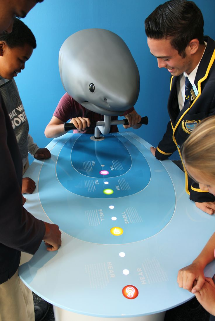 The Shark Senses exhibit - Africa's first virtual reality education experience aimed at shark preservation – was created by Formula D interactive for the Save Our Seas Shark Education Centre in Kalk Bay. Visitors explore the world of a shark, hunting prey and learning about the senses (touch, sight, hearing and smell) sharks use in the interactive virtual science exhibit.