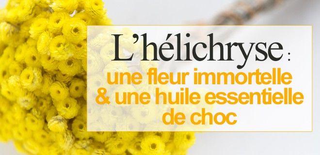 L�hélichryse : une fleur immortelle & une huile essentielle de choc