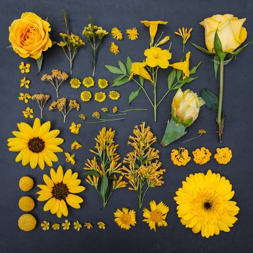 Color-organized array of yellow plants, photographed by Emily Blincoe