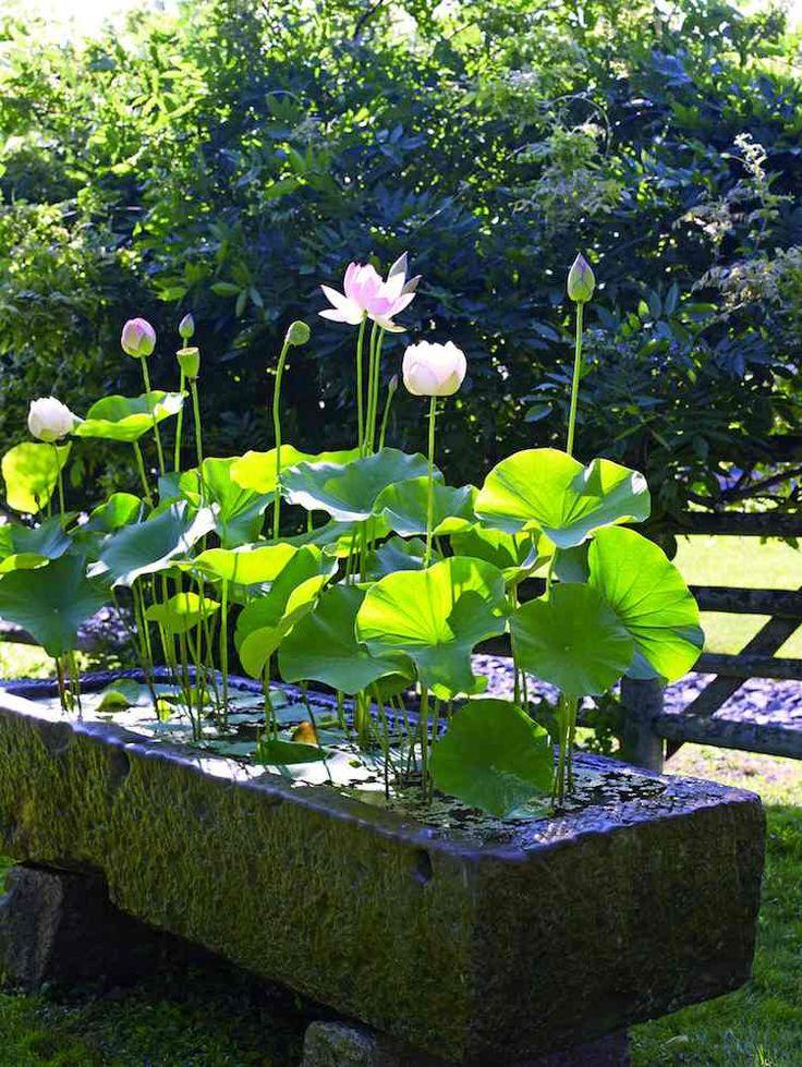 Créer un mini jardin aquatique – conception, flore et conseils pratiques