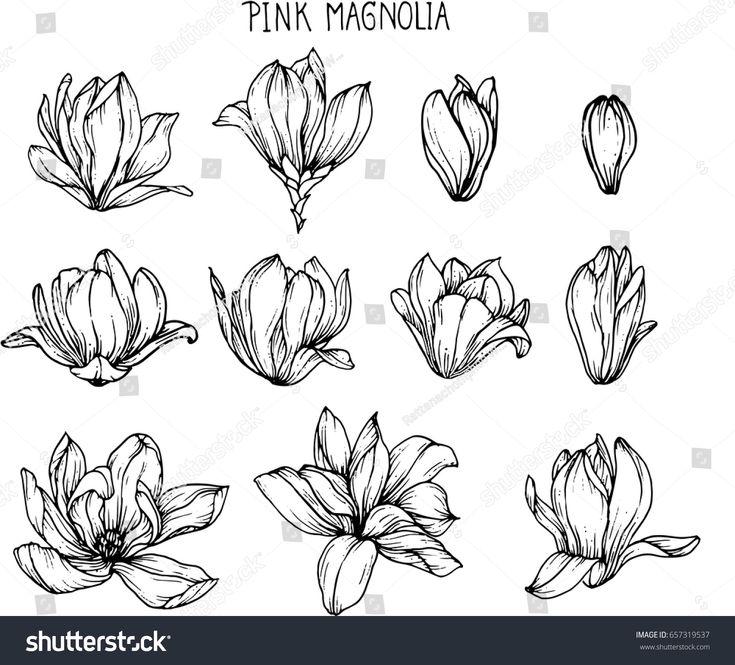 распускающийся цветок картинки карандашом дальнейшем перемещение происходит