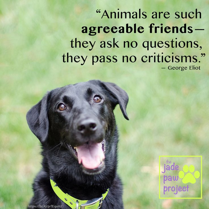 animals agreeable friends questions pass criticisms george