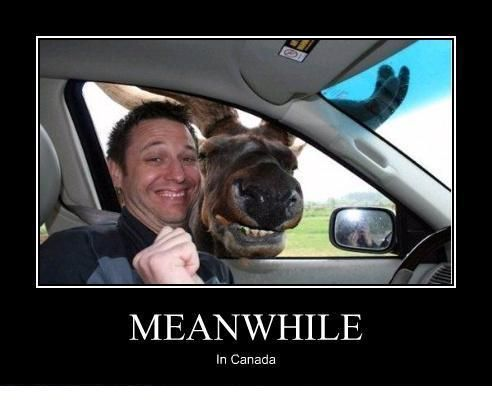 hahaLaugh, Funny Pictures, Moo, Meanwhile In Canada, Funny Stuff, Humor, Things, Smile, Animal